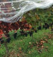 nets open