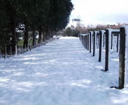 vineyard snow 2
