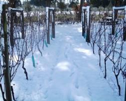 vineyard snow 4