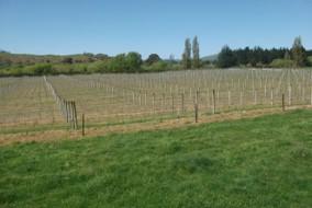 vineyard to view